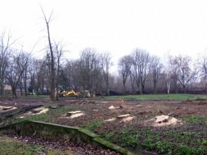 Wycinka drzew w Starym Ogrodzie (fot. archiwum)