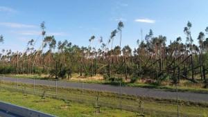 Zniszczony las w gminie Rogowo (fot. www.informacjelokalne.pl)