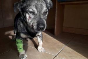 Screenshot_2019-01-24 Dzielnicowa pomogła psu przymarzniętemu do chodnika