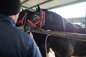 targi koni skaryszew (15)